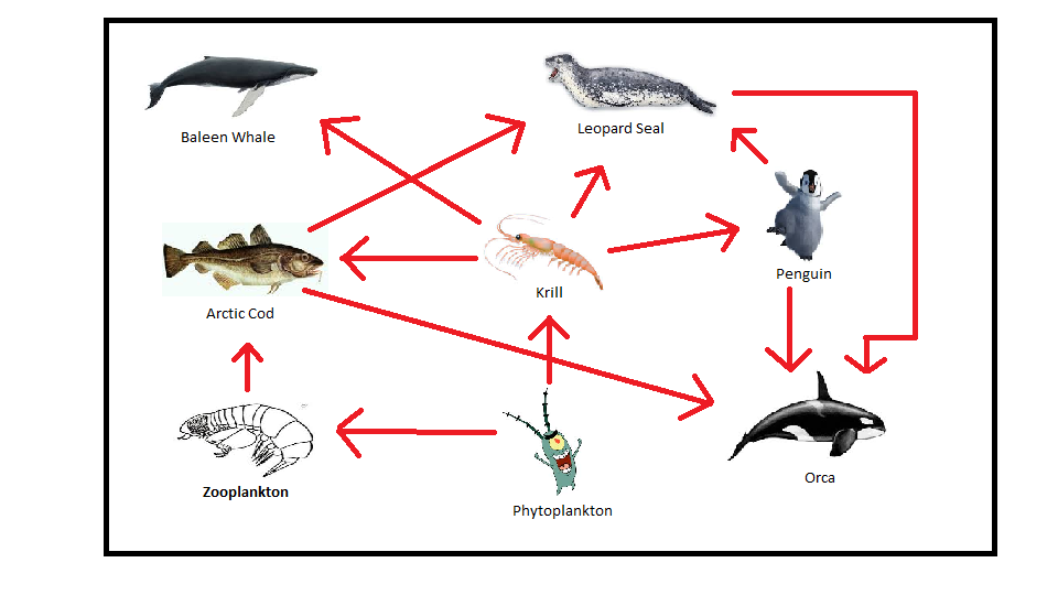 Food Web - THE ARCTIC OCEAN ECOSYSTEM